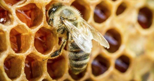 abelha-drogas.jpg.640x340_q85_crop