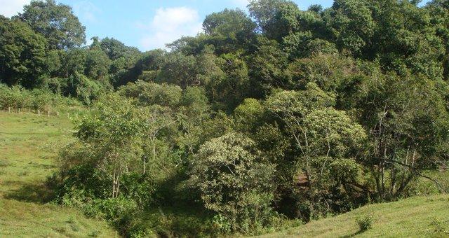 floresta-nativa.JPG.640x340_q85_crop