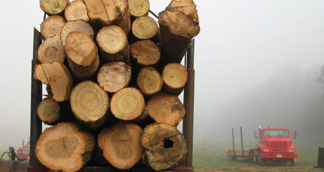 madeira desm.
