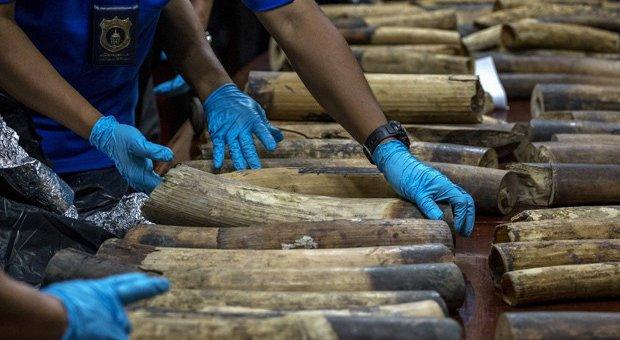 marfim-tailandia.jpg.640x340_q85_crop