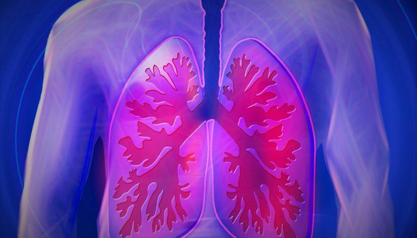 pulmão 1
