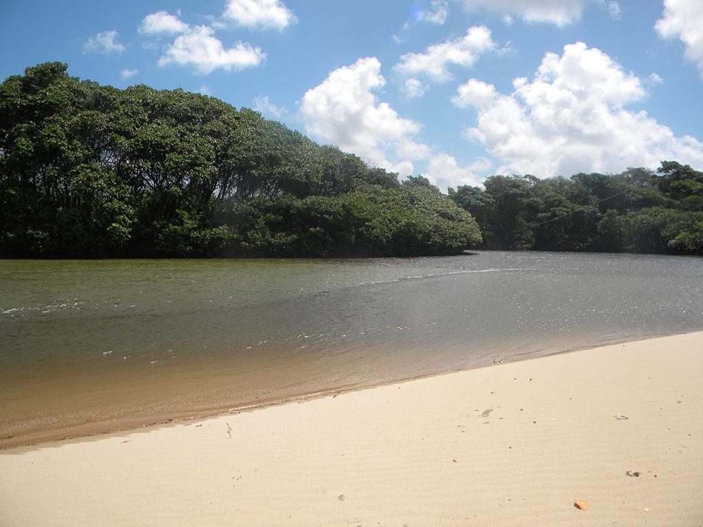 Área de mangue onde espécies de peixes, crustáceos e caranguejos se reproduzem.