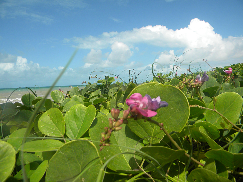 Praias são cercadas pela Mata Estrela, que é a maior reserva de Mata Atlântica em áreas de dunas.