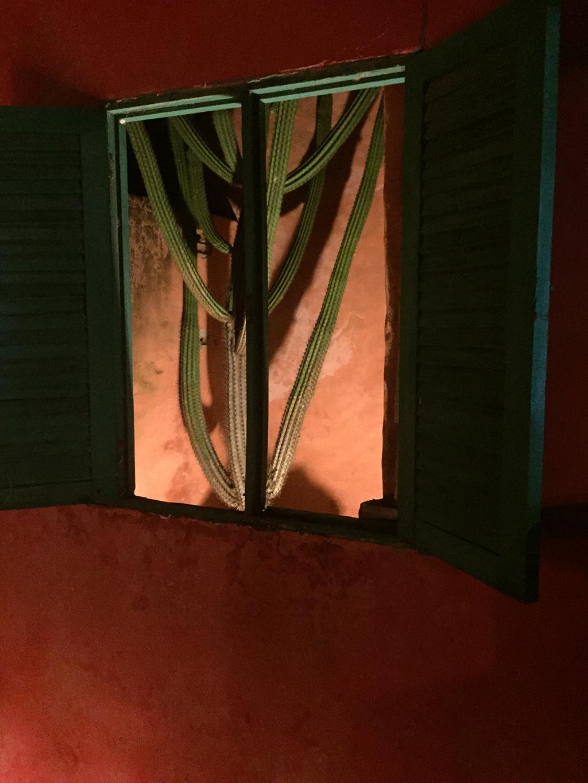 Mandacaru que batiza o restaurante de de Jares Ponciano, proprietário também da pousada Sagi-Iti,