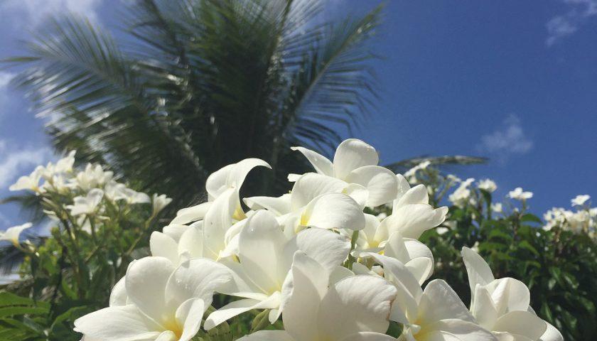 Flor característica da região