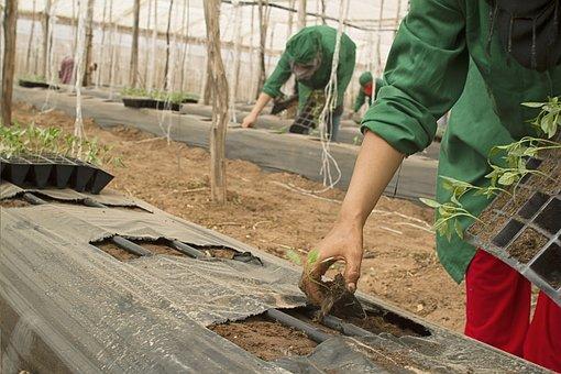 plantar1