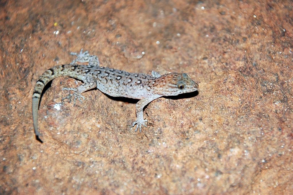 Evolução rápida permitiu que a espécie sobrevivesse em um habitat modificado Créditos: Divulgação