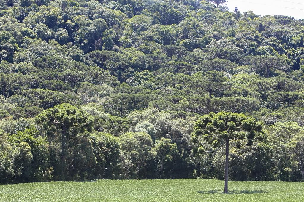O foco é manter a biodiversidade da floresta na Mata do Uru  Crédito: Rodolfo Buhrer