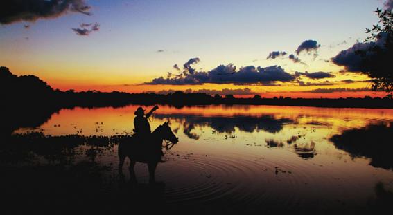 pantanal tropeiro