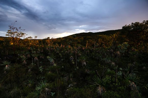 Alto Paraíso (GO) -  Entardecer no Parque Nacional da Chapada dos Veadeiros (Marcelo Camargo/Agência Brasil)