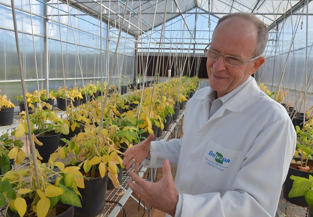 Elibio Rech com as plantas geneticamente modificadas de soja na casa de vegetação da Embrapa, em Brasília, DF. Foto: Adilson Werneck
