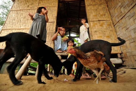 A raiva em seres humanos é uma doença transmitida, na maioria, por cãesFAO/ONU