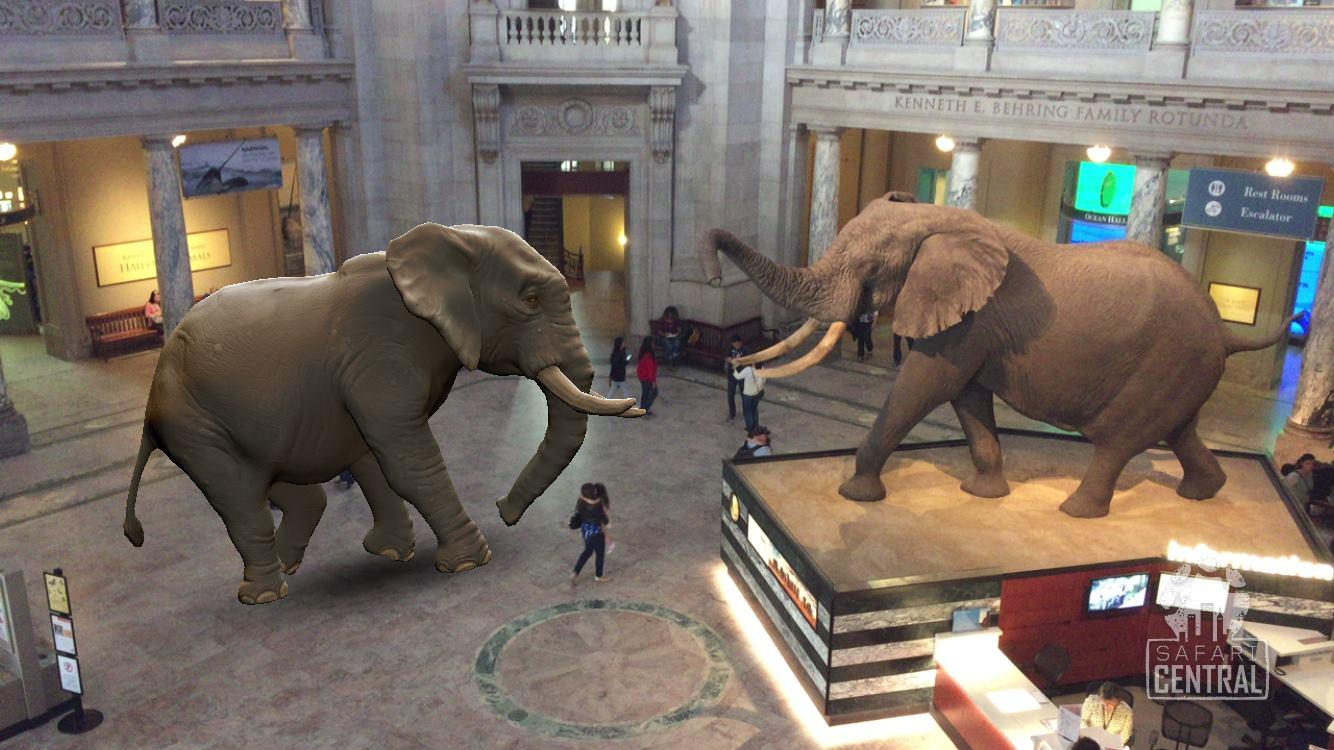 Melhor foto foi tirada no museu Smithsonian, em Washington (EUA) © Richard Gudz / Safari Central