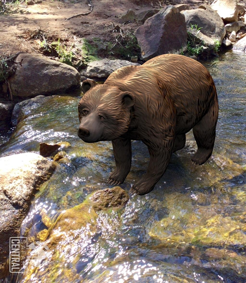 A melhor foto do urso-cinza Ethyl foi em uma correnteza, esperando por uma presa.  © Monica Wright / Safari Central