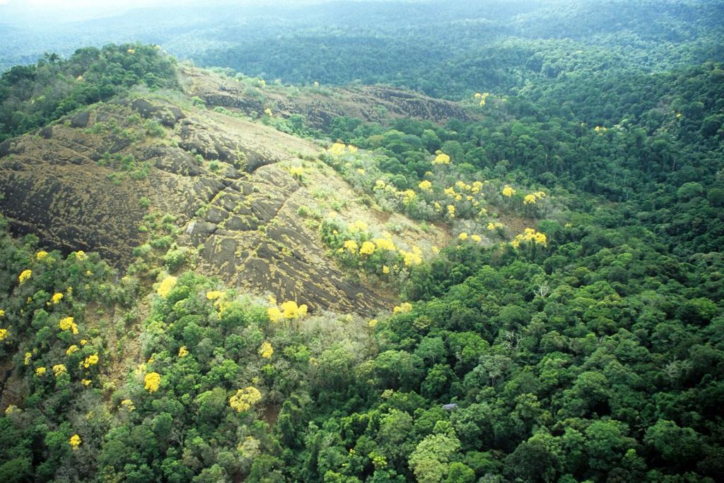 afloramentos rochosos (rock outcrops) região do Parque Nacional Montanhas do Tumucumaque, Brasil.