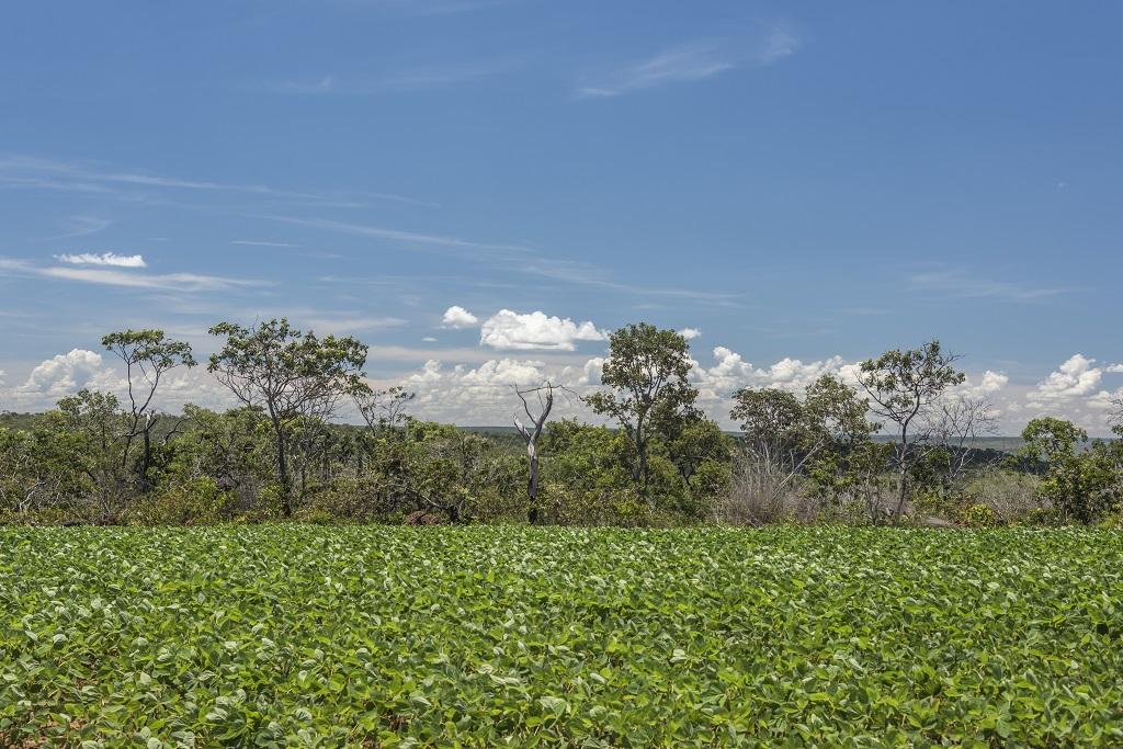 Assunto: Area de cerrado desmatado para plantio de soja - Cerrado nativo ao fundo Local: Arinos - MG Data: 01/2017 Autor: Andre Dib