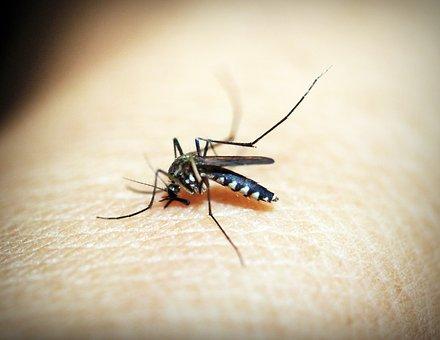 mosquitoe-1548947__340