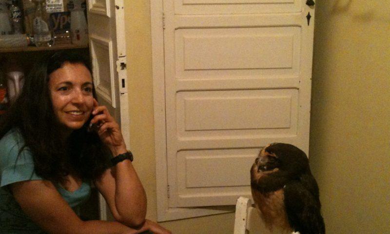 A-coruja-me-observando-ao-telefone