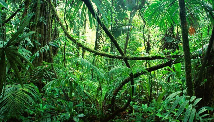 amazonia_floresta_água