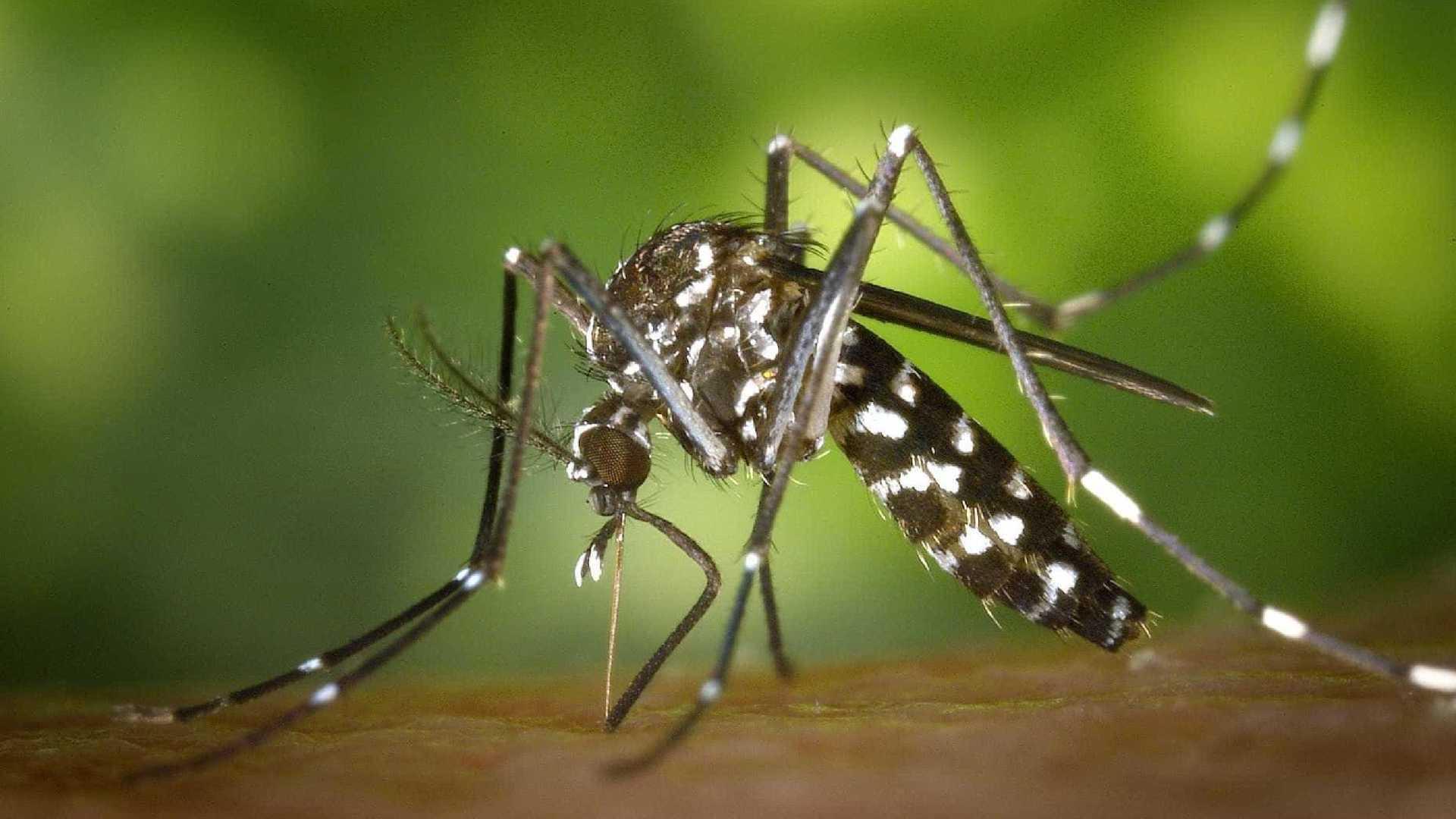 MALARIA5